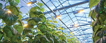 Supplemental Greenhouse Lighting