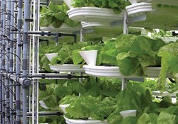 The Convenience of Hydroponic Nutrient Application Systems