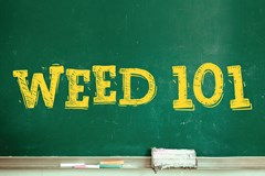 Why More Professional Training in the Cannabis Industry is Needed