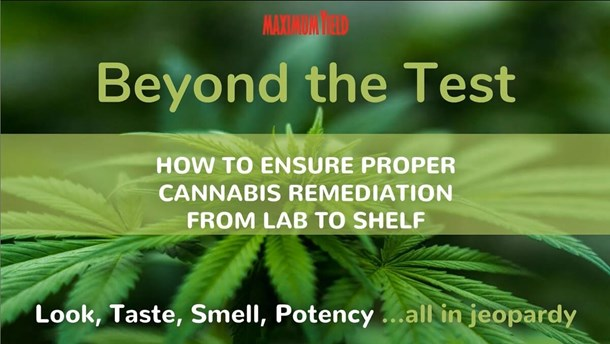 Beyond the Test: How to ensure proper cannabis remediation from lab to shelf